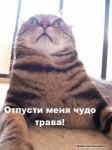 Кошачий приход...:)