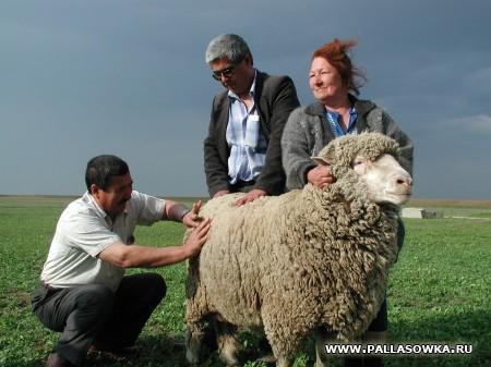 Овца-Кормилица. На палласовских просторах. а.Тахтаров, гл2.