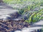 гибель посевов